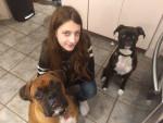 Chien Aria , blue et moi - Boxer Femelle (1 an)