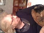 Chien divine - Boxer Femelle (2 ans)