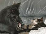 Chien Anakin et les chatons - Berger Groenendael Dracula  (0 mois)