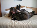 Chien BOSS cane corso et sa maman - Cane Corso  (0 mois)