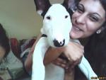 Chien bull terrier mon ptit pignouf  - Bull terrier  (0 mois)