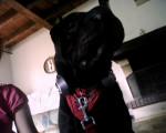 Chien Etoo - Sharpei Femelle (2 ans)