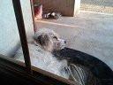 Chien Gabana - Fox terrier à poil dur Femelle (6 ans)