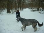 Chien syntaxe, mon irish wolfhuond - LEVRIER IRLANDAIS - Lévrier irlandais  (0 mois)