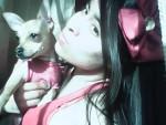 Chien deisy - Chihuahua Femelle (1 an)