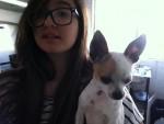 Chien Gianna - Chihuahua Femelle (1 an)
