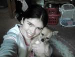 Chien Oscar(dog) - Chihuahua Mâle (3 ans)
