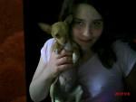 Chien CLOE - Chihuahua Femelle (1 an)