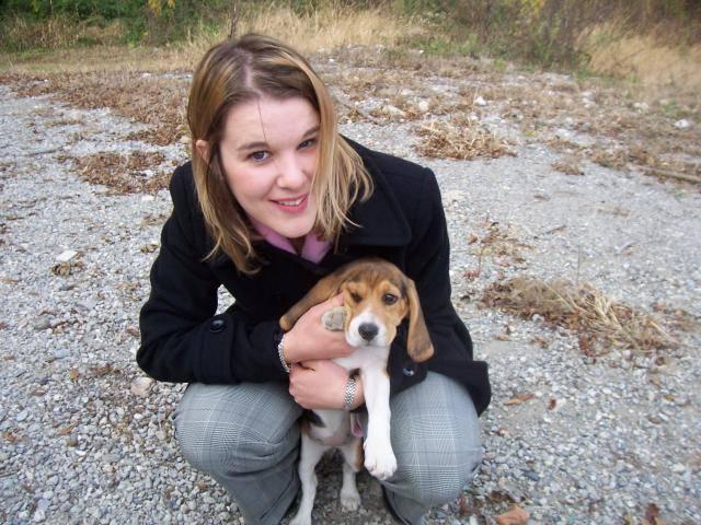 Photo BEAGLE CASSY 4 MOIS : Beagle (4 mois)