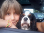 Chien Lilly -  Femelle (7 ans)
