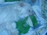 Chien Alaska et son copain Kermit -   (0 mois)