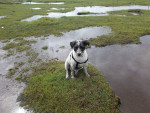 Chien Surrounded by pools -  Mâle (5 ans)