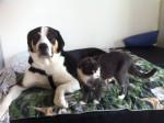 Chien ipso et le petit chat léo -  Mâle (2 ans)