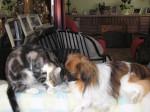 Chien Mes Amours et leurs copains chats -  Femelle (0 mois)