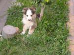 Chien Lucky -  Mâle (3 mois)