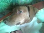 Chien My dog -  Femelle (1 an)