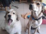 Chien Bella et Dgena -  Femelle (0 mois)