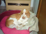 Chien IMG -   (0 mois)