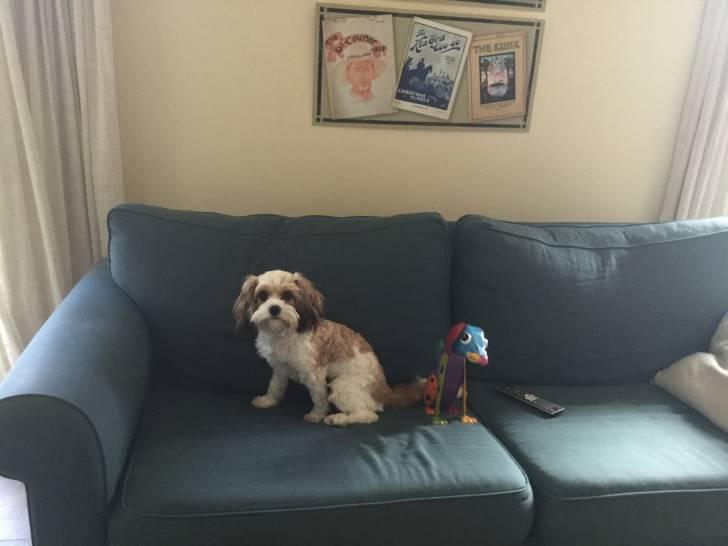 Chien Charlie -  Femelle (8 mois)