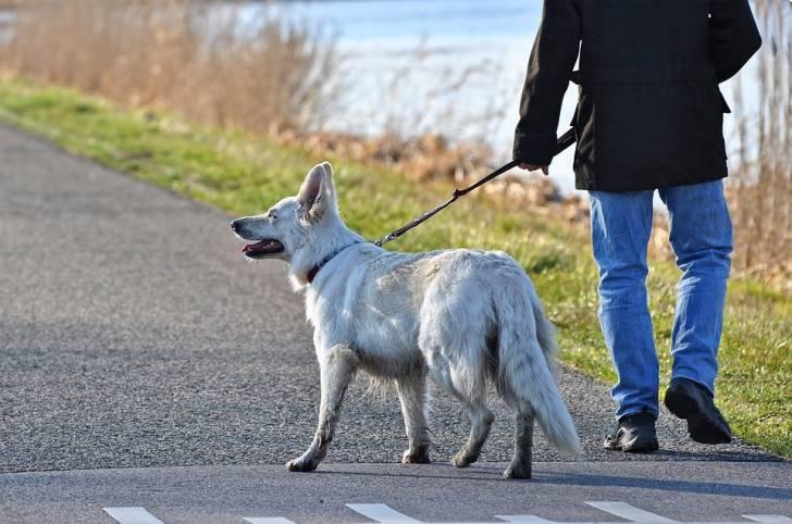 Le chien est intéressé par les promenades