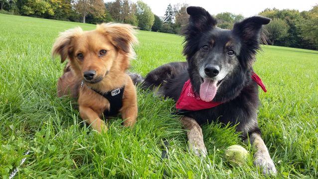Tess & Paco