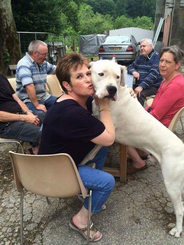 Mâle dogue argentin : Petite Annonce chien