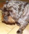 Adorable petit chien adulte