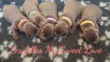 Chiots labradors chocolats