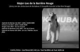 Fox Terrier Poil dur LOF à vendre