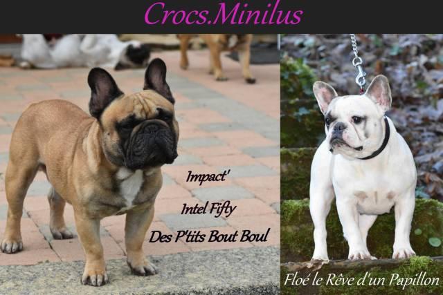 4 Chiots Bouledogue Francais A Vendre 3 Femelles 1 Male Petite Annonce Chien