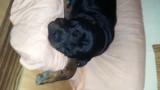 Superbe Rottweiler de 5 ans cherche fiancée