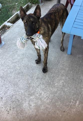 Scooby, un an et quatre mois, à donner