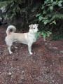 Recherche famille d'accueil pour chien