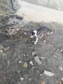 chien Border Collie Mâle à donner