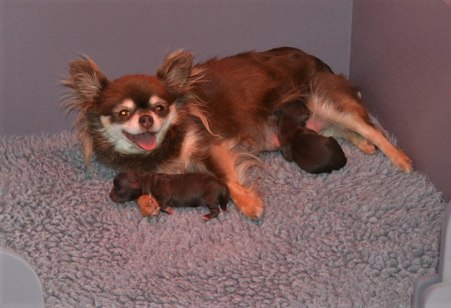Galice et ses bébés