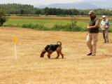 Chiots Airedales Terriers de travail à vendre