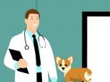 Candidature de soigneur animalier