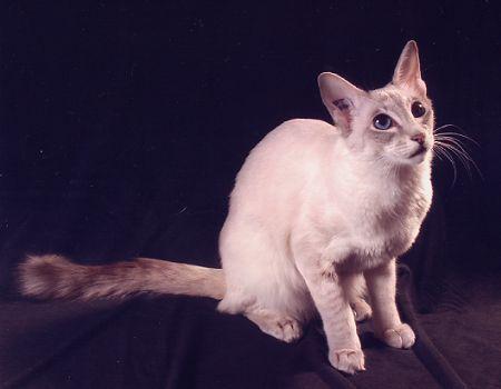 Concours de belle chatte