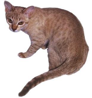 concours exibition des belles chattes - Exhibition et