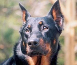 Manteau impermРіВ©able chaud chien