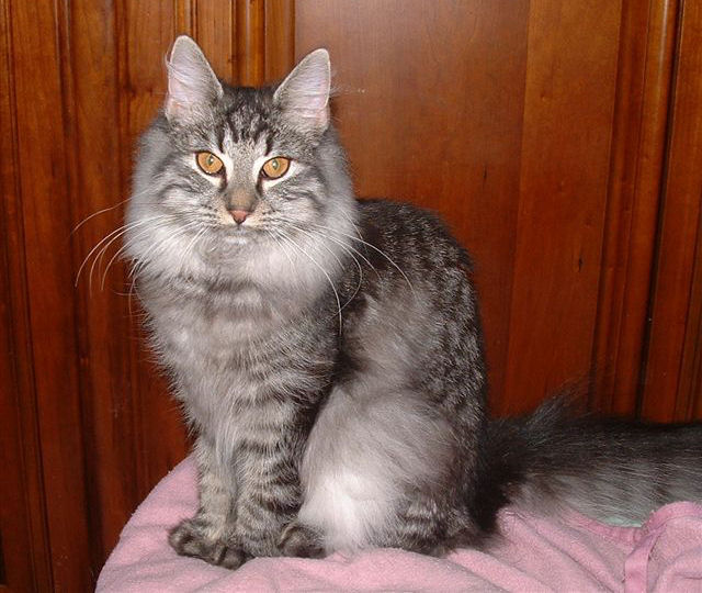 te chat Quimper